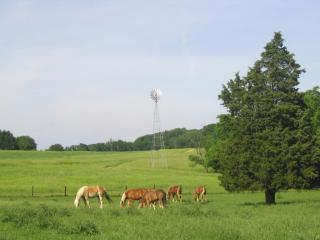 Haskey Farm