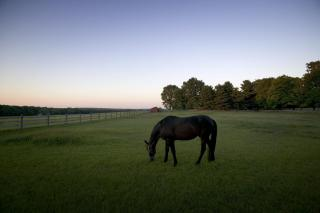 Mark Ludak_Marion Farms